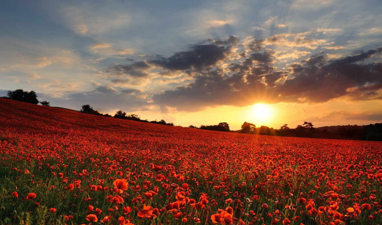 remembrance, день, poppy, poppies, поле, нояб, remembranceday, забыть,