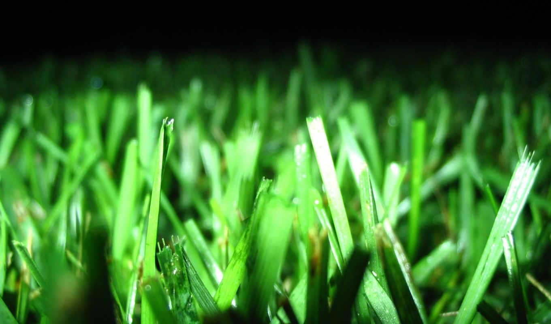 зеленые, широкоформатные, подборка, cvety, картинок, замечательная, отличная,