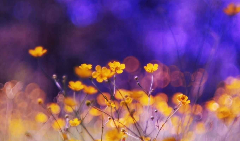 растительность, яркие, природа, цветы,