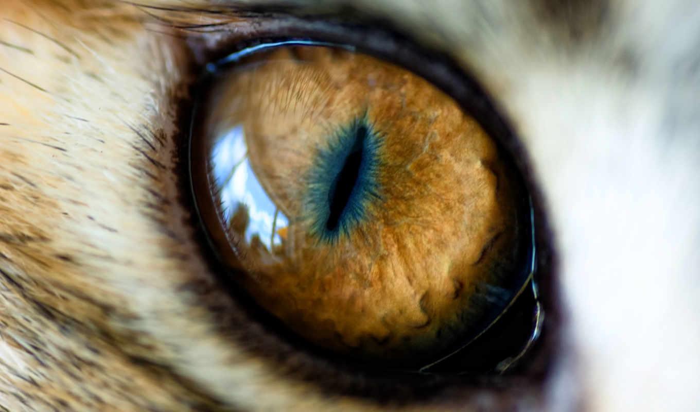 plus, yeux, nous, serait, monde, animal, les, règne, beaux,
