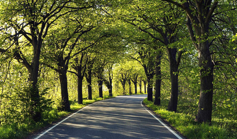 дорога, асфальт, лес, деревья, природа, сквозь, дороги, осень,
