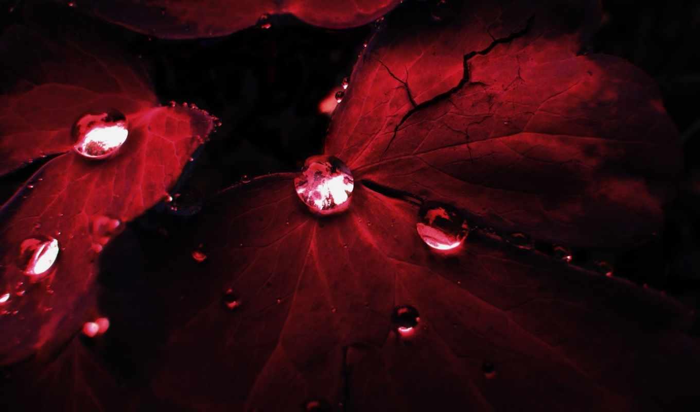 природа, красные, капли, осень, листва, росы, темно, красных, waters, листьях,