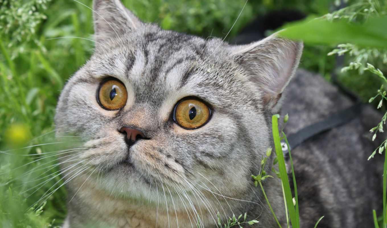 кошки, кот, котята, zhivotnye, пушистые, striped, заставки,