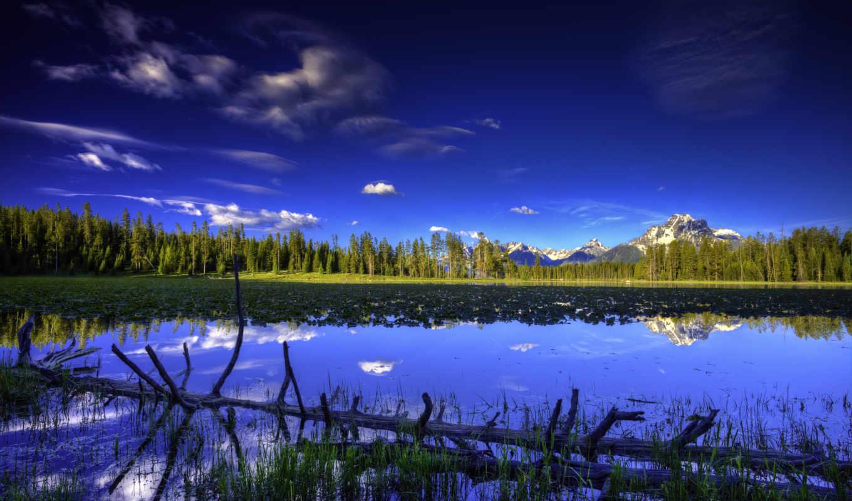 снимок, лесной, масив, природа, панорамный, озеро, коряга, небо, берег, простор, ярко, кувшинки,