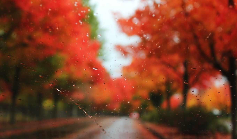 осень, стекло, капли, деревья, дождь, размытость, дорога, картинка,