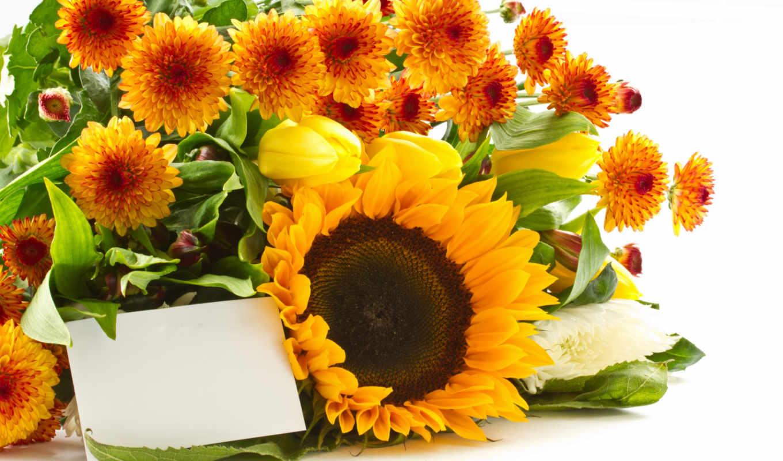 flowers, мб, желтые, соняшники, квіти, часть, pixels,