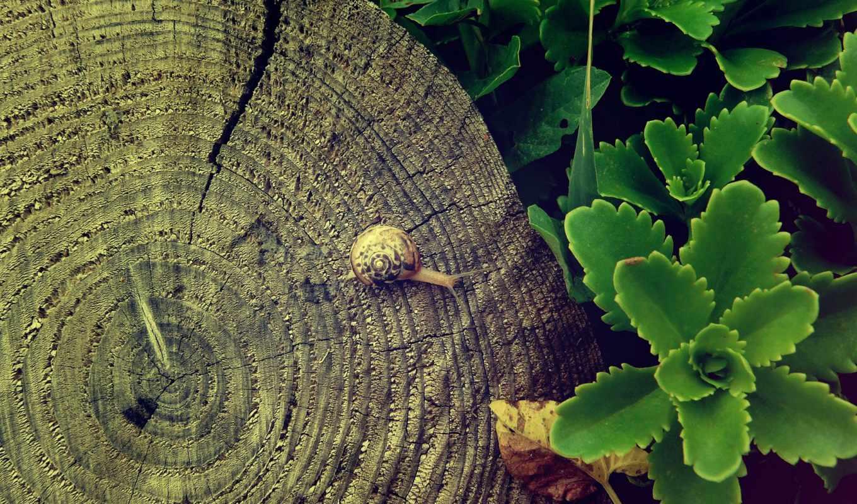 ,, зеленый, лист, дерево, завод, ствол, организм, адаптация, ботаника, древесина, цветок, пень