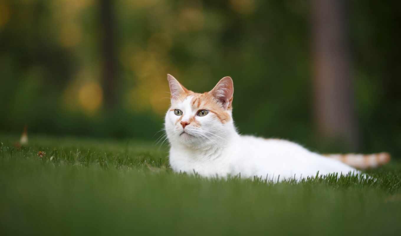 кот, трава, смотреть, взгляд, морда, stay