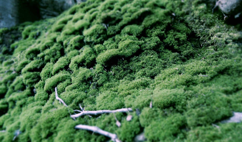 природа, изображение, зелёный, картинок, picsfab, фабрика, macro, эротику, показывать, moss, пандора, sloau,