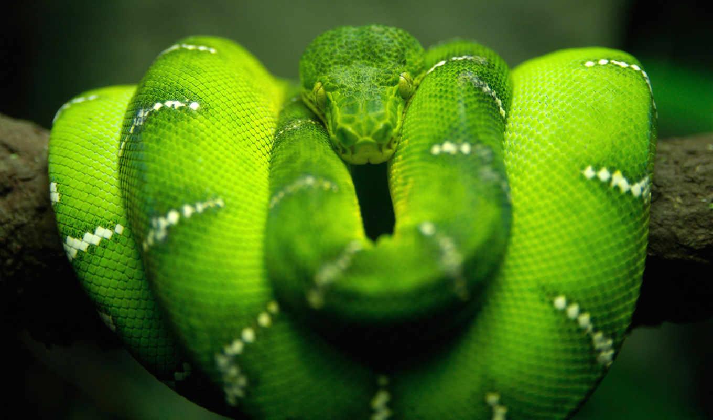 змея, природа, зелёный, макро,