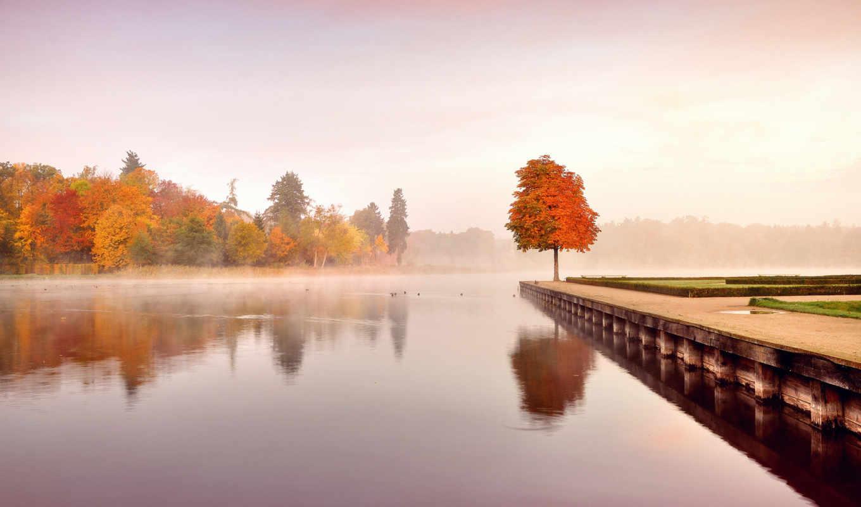 вода, дерево, природа,