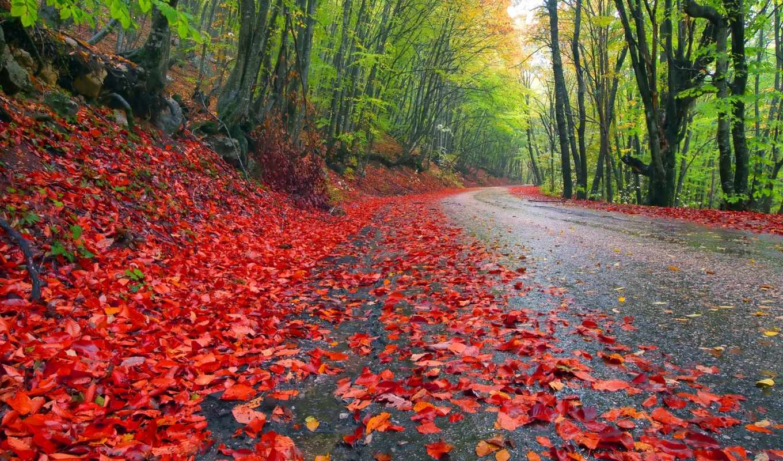 природа, деревья, небо, пейзаж, дорога, лес, осень, leaves, trees, landscapes, картинка, grass, roads,
