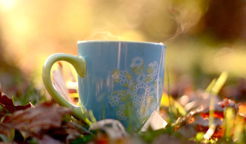 чая, cup, teas,