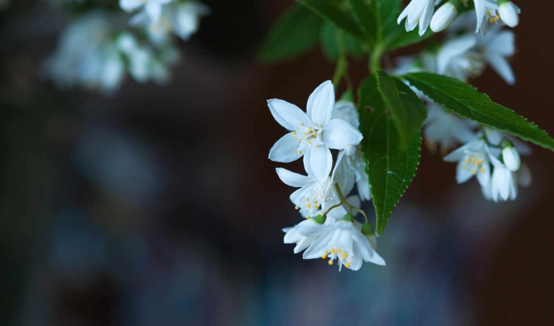 макро, размытость, цветы, цветение, browse, листья,