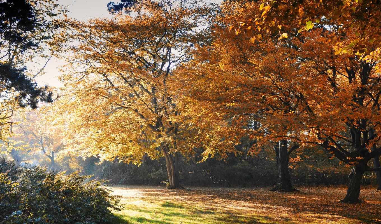 осень, листья, страница, деревя, park,