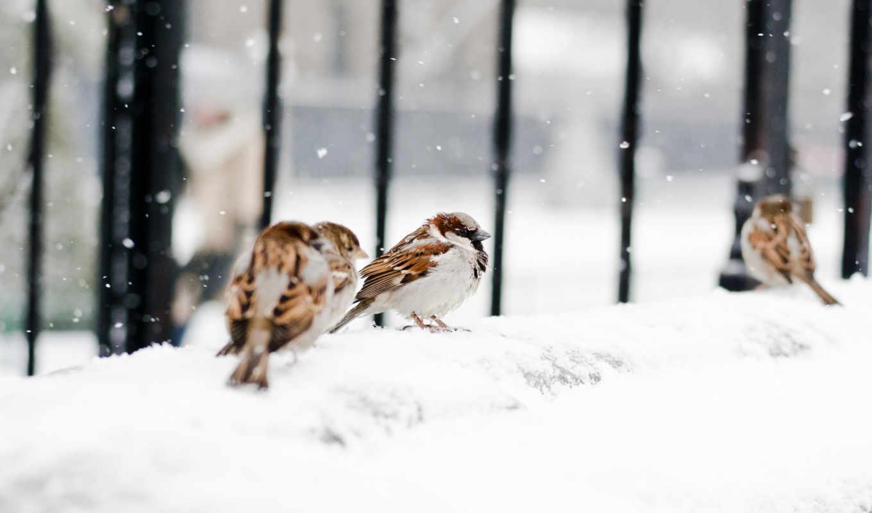winter, снег, animal, desktop, животных,