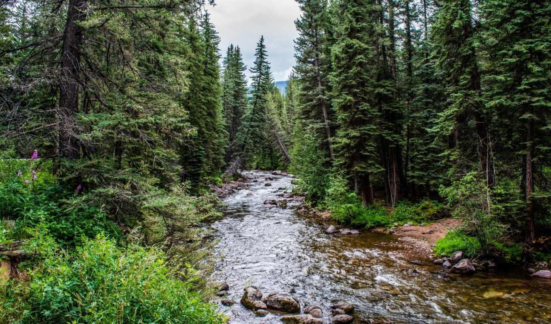 лес, река, природа, images, definiton, landscapes, widescreen, trees, desktop,