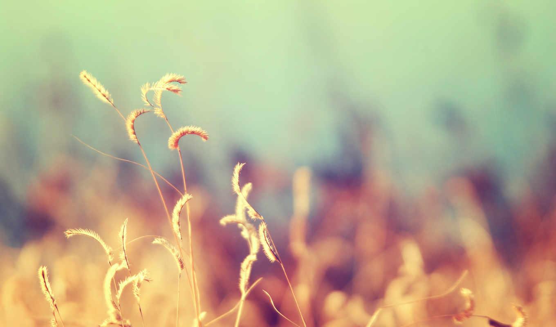трава, макро, ваниль, природа, красиво,