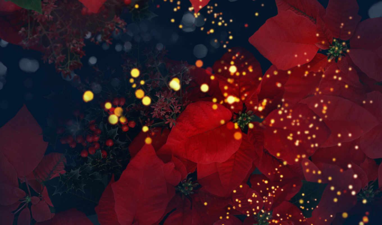 цветы, лепестки, яркие, обои, цветов, тэги, цвета,