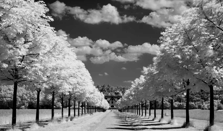 природа, небо, аллея, дорога, горизонт, облака, wallpaper, деревья, ipad, hd, black, white,
