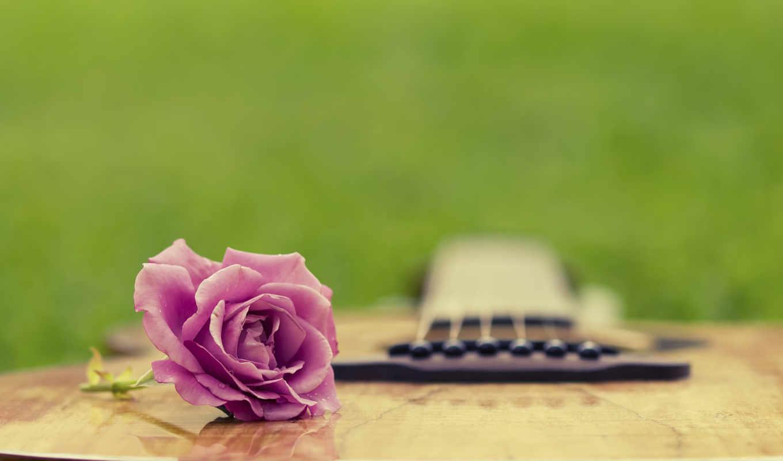 гитара, трава, summer, полянка, гитары, роза, бегония,