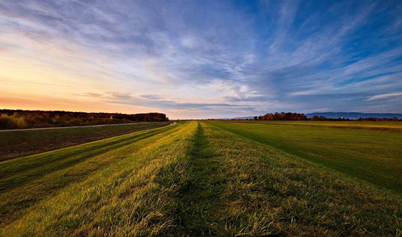 небо, поле, деревья, горизонт, вечер, облака, трава, дек,
