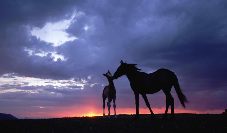 лошади, закат, небо,