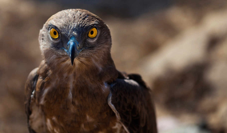 hawk, ojo, птица, зодиака, файлов, halcón,