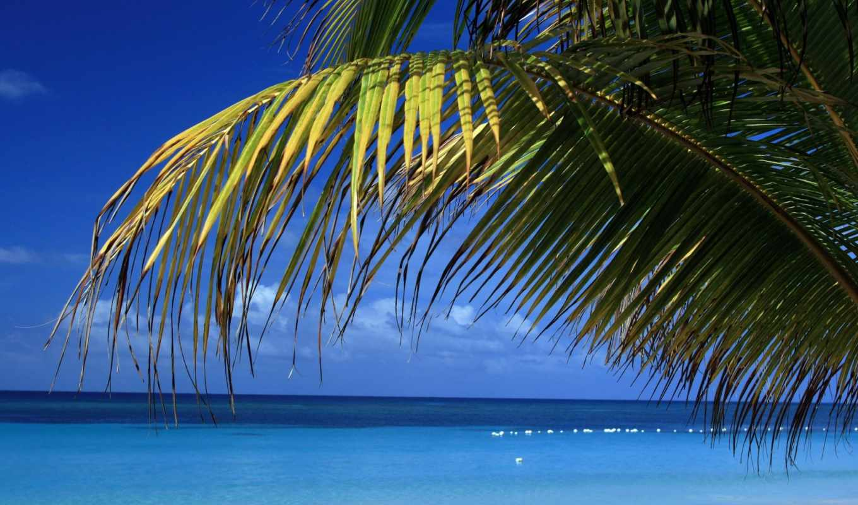 море, пальмы, branch, palm, дек, tropics, ocean, bloom,