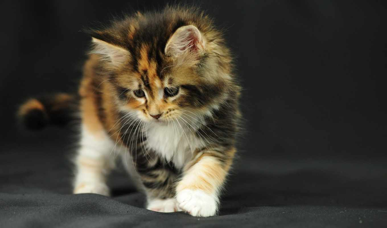 кошки, zhivotnye, животных, cats, коллекция, природа, природы, котята, яndex,