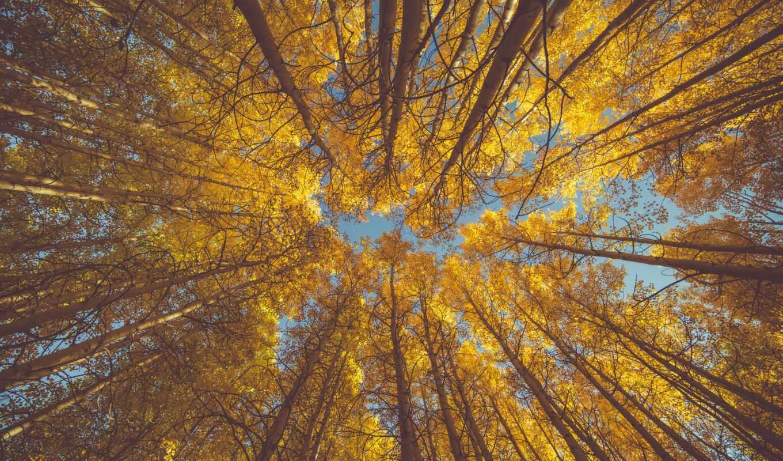 фотообои, дерево, стена, день, москва, осень, россия, руб, производственный, доставка, ниже