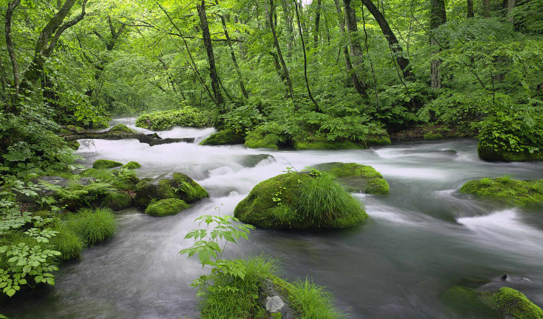лес, водопады, осень, девушек, красивых, подборка,