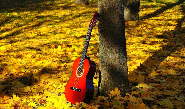 осень, природа, листва, красивые, гитара, картинка, trees, струны, цветы, листья,