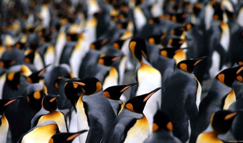 пингвины, пингвинов, императорских, slaida, фото, императорские, archival, техника, binder,