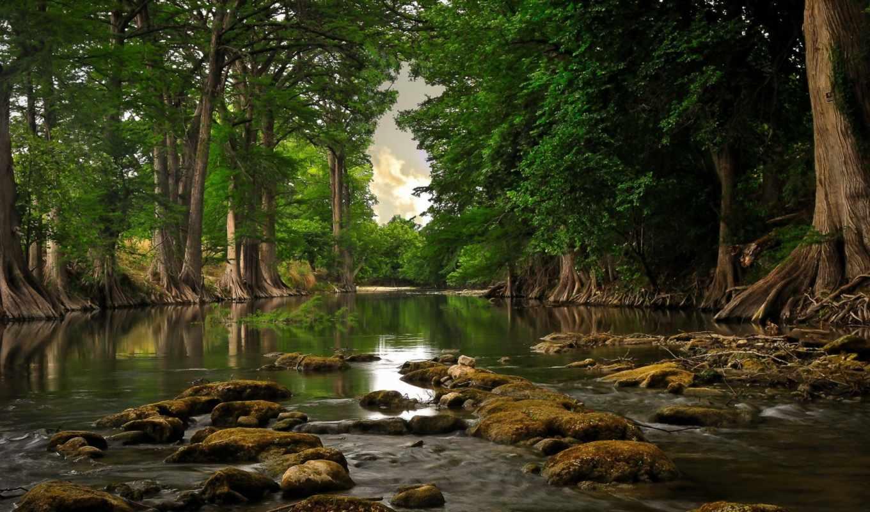 деревья, река, корни, камни, вода, мох, лес, природа, день,