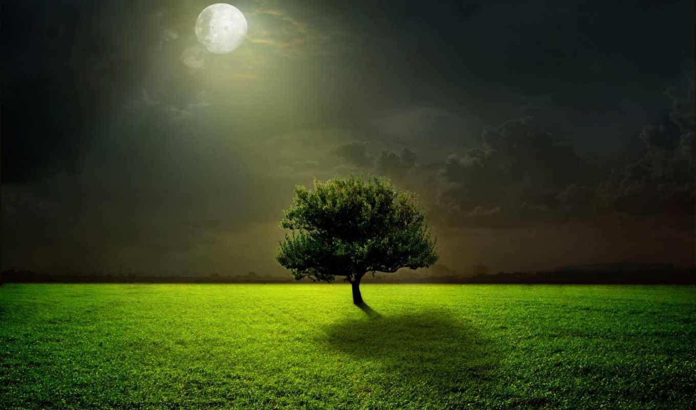 телефон, зелёная, картинка, картинку, трава, fotohomka, нояб, сайте, mobile, фото, бесплатную,