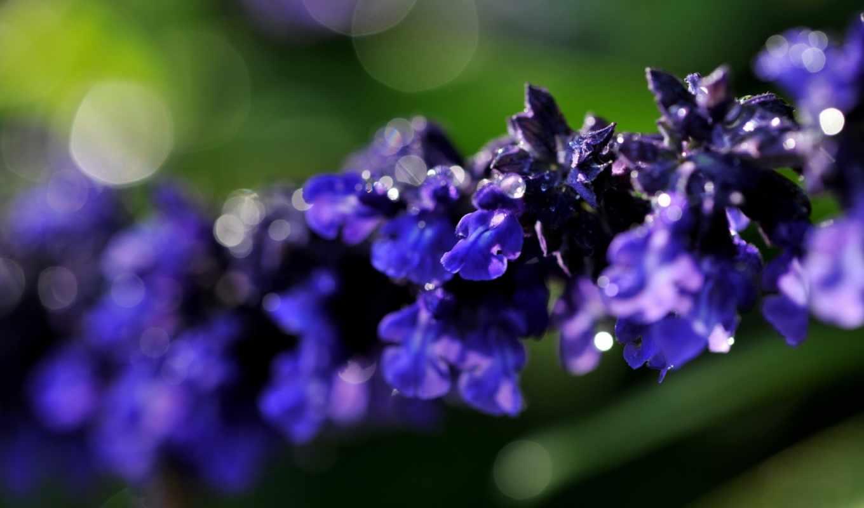 macro, flora, картинок, фиолетово, песочница, красивые, красивых, full, download, view,