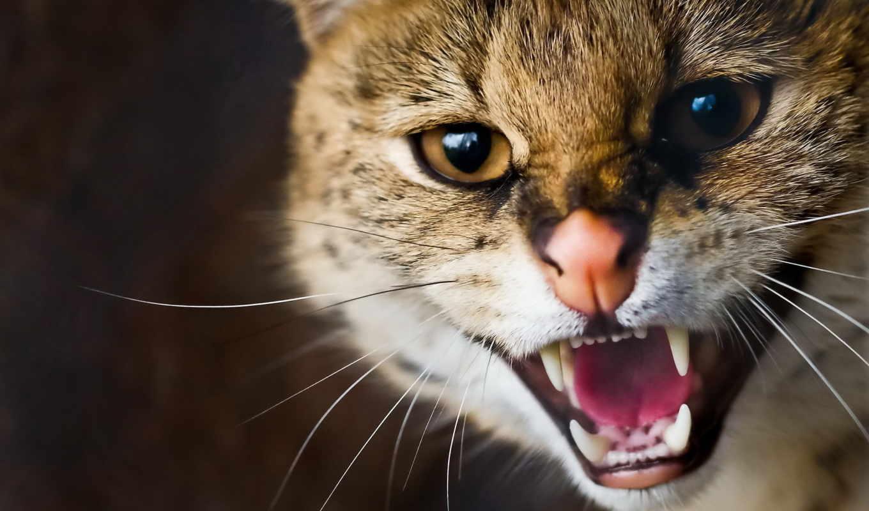 кошка, дикая, усы, морда, сервал, кошки,
