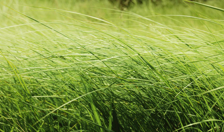 трава, зелёная, совершенно, свой, wpapers, макро,