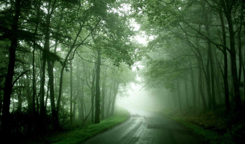 туман, дорога, лес,