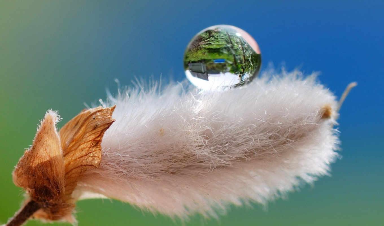 макро, природа, drop, роса, пушистик,