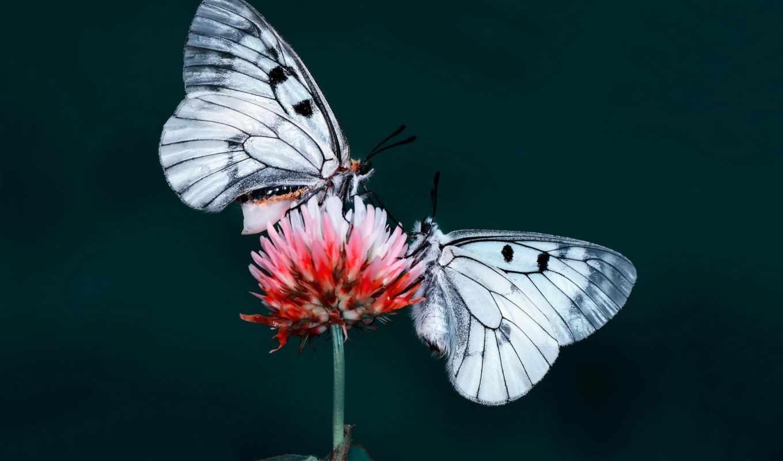 butterflies, elements, tall, качественных, коллекция, разрешений, центр, archive, автомобили, макро,