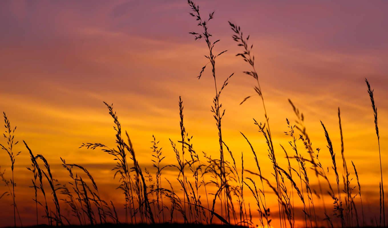 небо, поле, трава, закат, солнце, сиреневый, желтый, картинка,