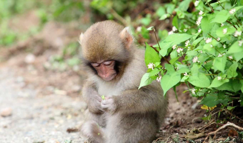 природа, обезьяна, животные, трава, взгляд, обезьяны, город,
