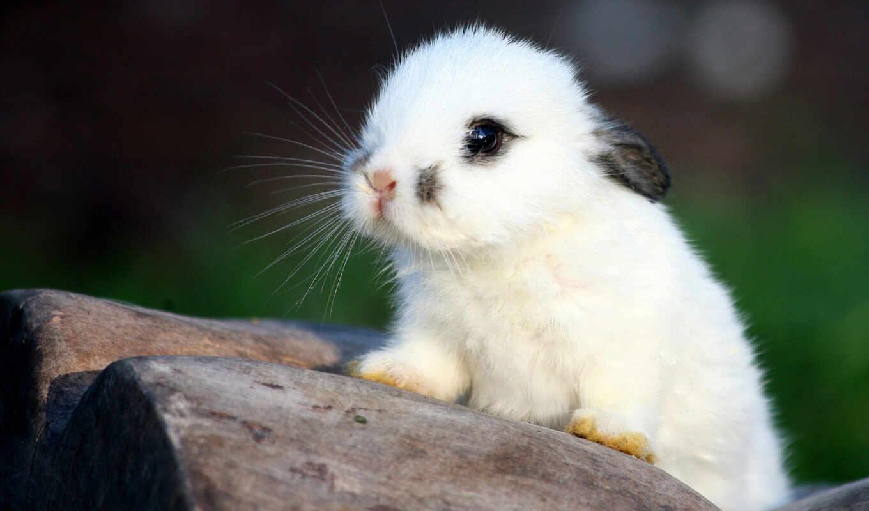 красивые, кролик, кролики, white, заяц, текстура, baby, bunny,
