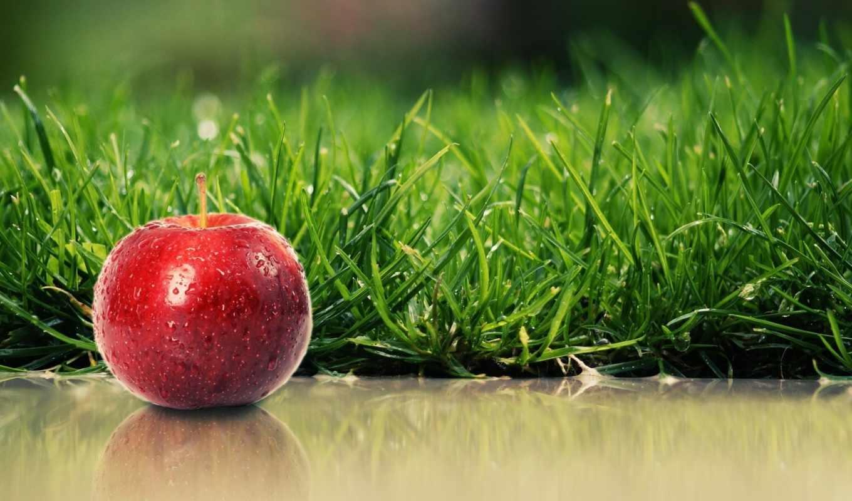 apple, яблоки, трава, красное, зелёная, summer,