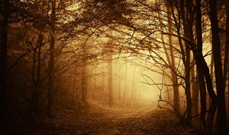 дорога, деревья, лес, ветки, туман, осень, тропинка,