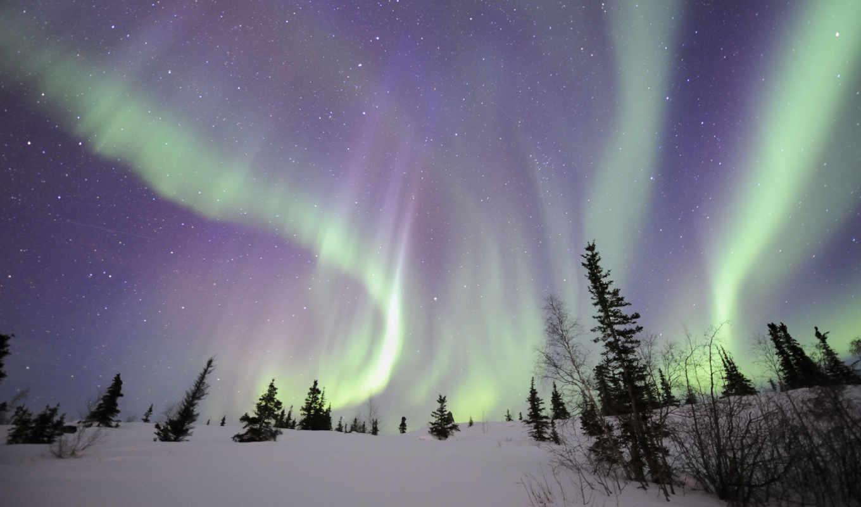 северное, свет, ночь, winter, деревья,