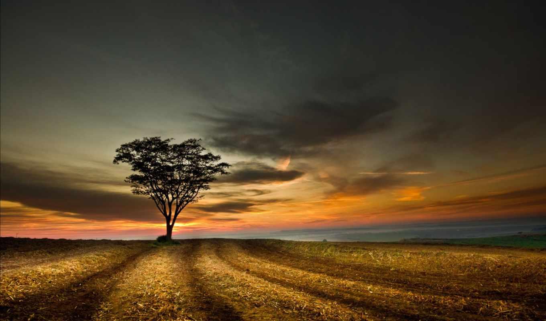 закат, дерево, поле, одинокое, landscape, небо, природа,