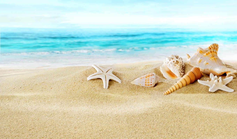 пляж, club, песок, seashells, ocean, экран, картинка, hotel, под, ванну,